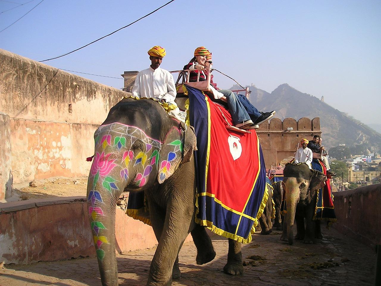 Eléphant Inde