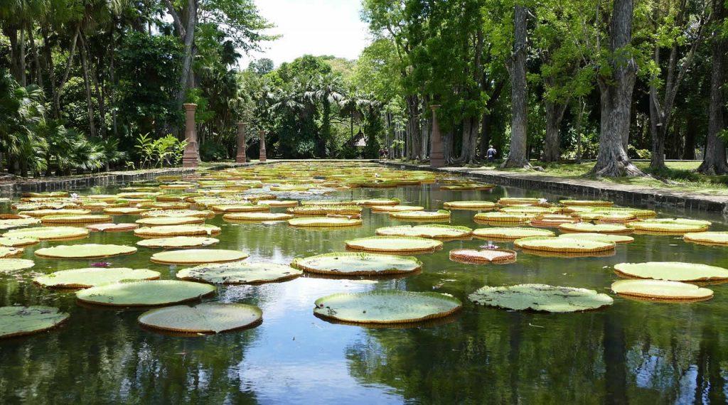 Le Jardin Botanique des Pamplemousses à l'Île Maurice